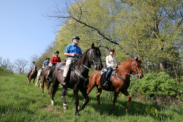 Mountain Horse Trail Rides